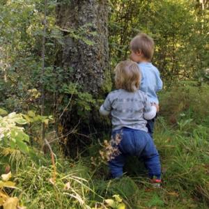 Barnen känner på träden