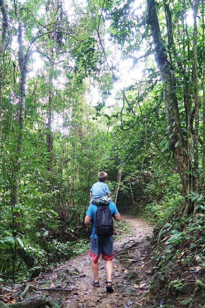 vandring i regnskog