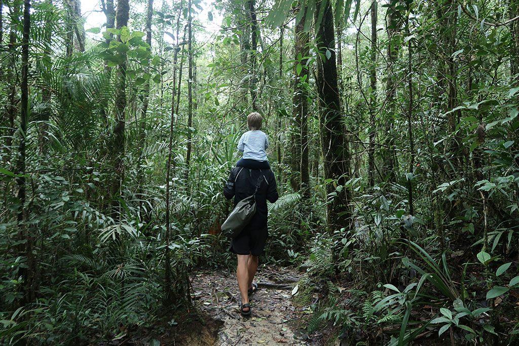 1kinabalu national park